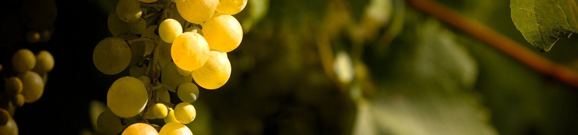 uva-prosecco